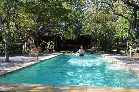 Toro Yaka Bush Lodge: Pool