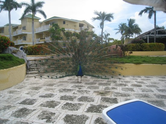 Tryp Cayo Coco : Beautiful show off!