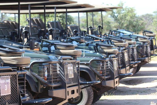 Sabi Sabi Bush Lodge: Land Rovers awaiting our arrival