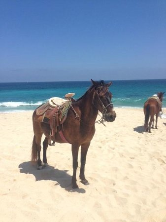 Dreams Los Cabos Suites Golf Resort & Spa: Horses infront of the Hotel