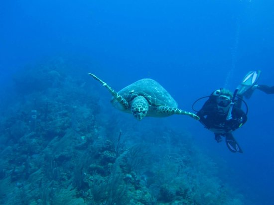 Hamanasi Adventure and Dive Resort: Tahne and the Turtle!