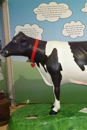 Muswellbrook, Australien: Bessie the Cow