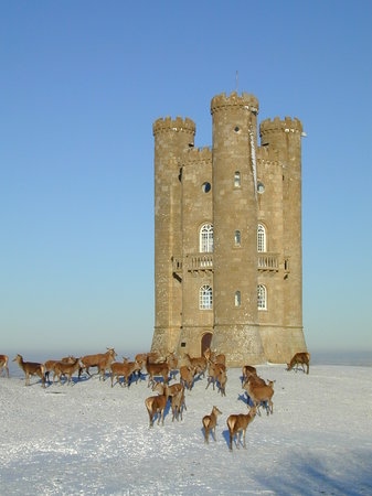 Broadway, UK: Tower, snow and deer