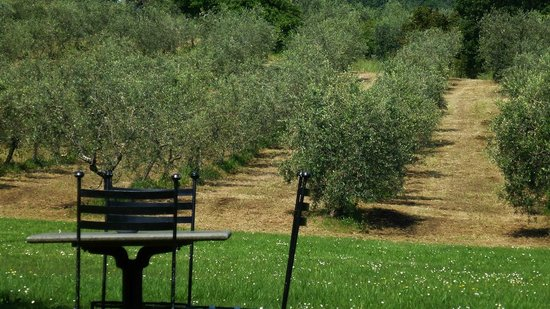 Villa Campestri Olive Oil Resort照片