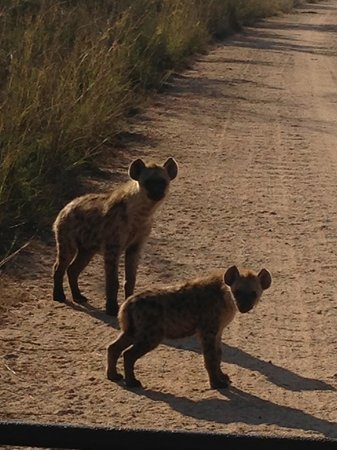 ‪‪Lukimbi Safari Lodge‬: Hyenas near den‬