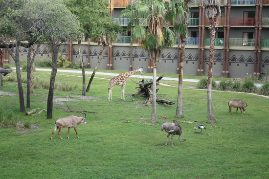 Disney's Animal Kingdom Villas - Kidani Village: The view from my balcony