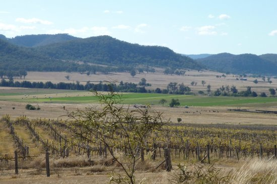 Muswellbrook, Australien: View from Cellar Door