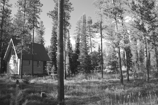 Columbia Falls, MT: Little bear cabin