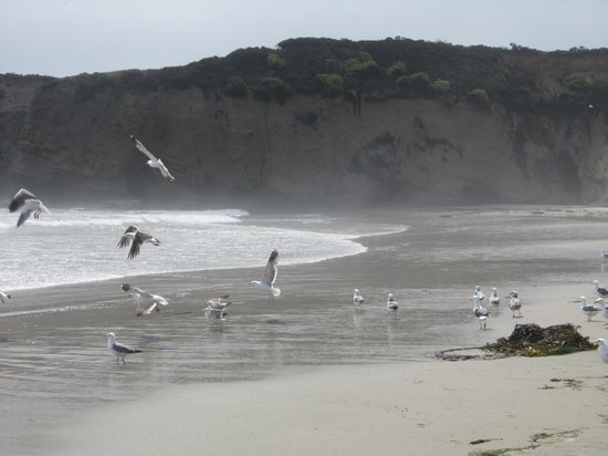 Pescadero, CA: More of that desolate private beach
