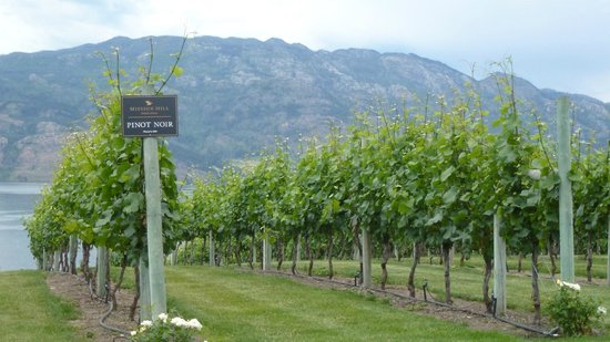 West Kelowna, Kanada: Wine