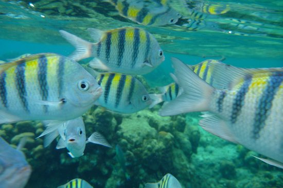 West Bay, Ονδούρα: Tropical fish everywhere....up close and personal.