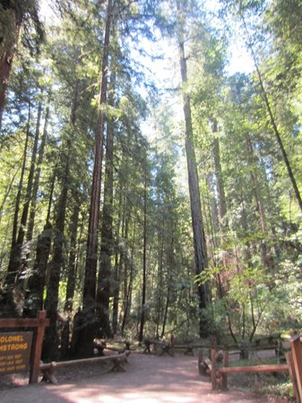 Guerneville, Californie : Walking through the groves