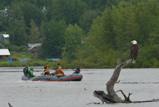 Haines, AK: floating peacefully down the Chilkat River with Eagles in view!