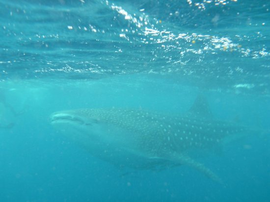 Ningaloo reef dive reviews coral bay western australia attractions tripadvisor - Ningaloo reef dive ...