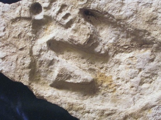Dinosaur Over A Human Foot Print Picture Of Creation
