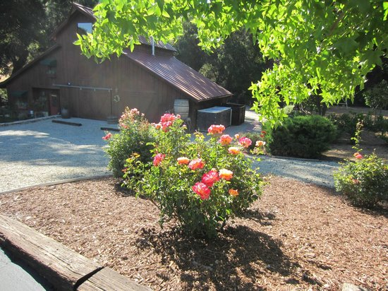 The Creekside Bed & Breakfast: Roses along driveway.