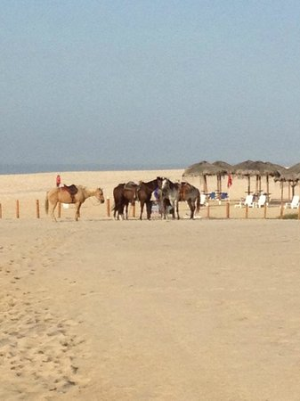 Hilton Los Cabos Beach & Golf Resort: horses for riding--felt like their owners should give them shade and more water