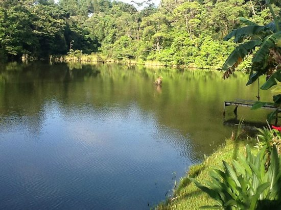 Nuevo Arenal, Costa Rica: View of the private lake at the B&B