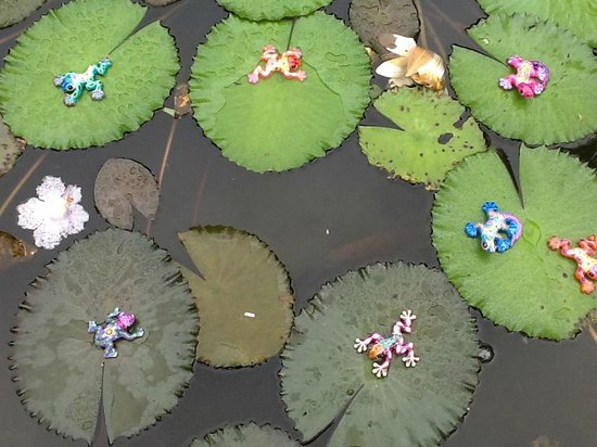 Nuevo Arenal, Costa Rica: Frogs on the Lilly pads at the Gallery