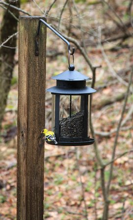 ‪‪Millersburg‬, ‪Ohio‬: Bird feeders‬