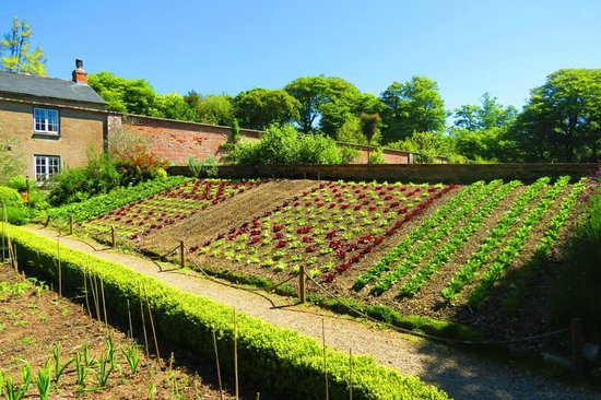 amazing walled garden with vegetable beds on an angle
