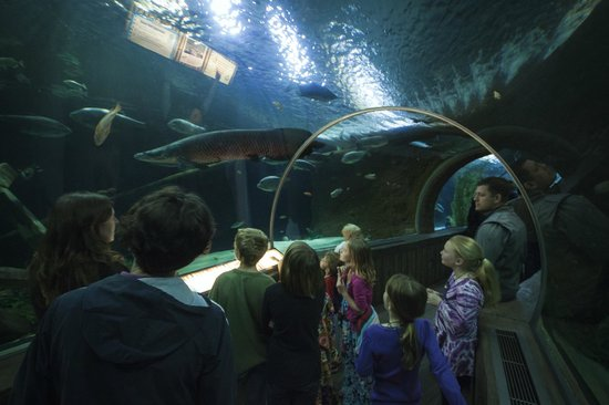 Behind The Scenes Tour Picture Of Sea Life Minnesota
