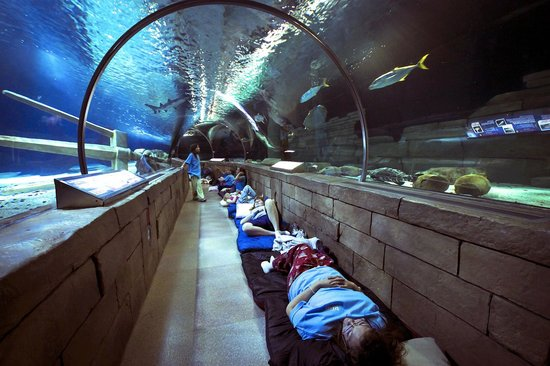 Overnight Group Sleeping In The 300ft Ocean Tunnel Picture Of Sea Life Minnesota Aquarium
