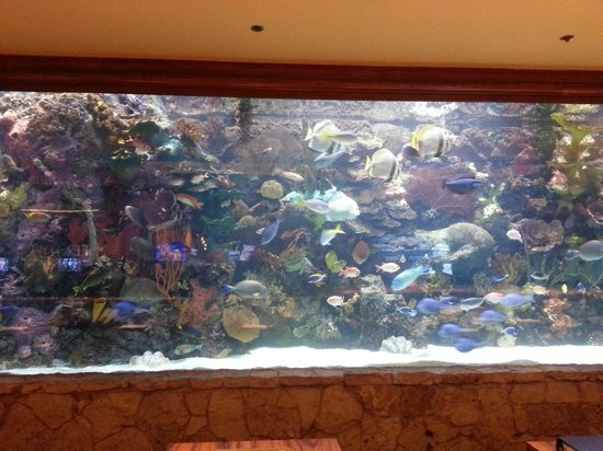 Beautiful fish tank in mirage lobby picture of the for Fish hotel tank