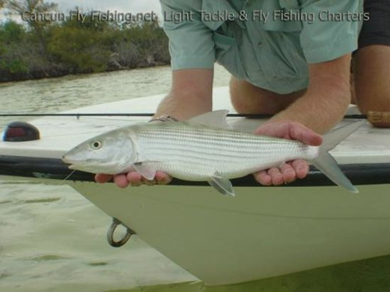 January 2014 picture of cancun fly fishing light tackle for Cancun fishing charters