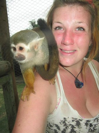 African Dawn Bird and Wildlife Sanctuary: Squirrel Monkey