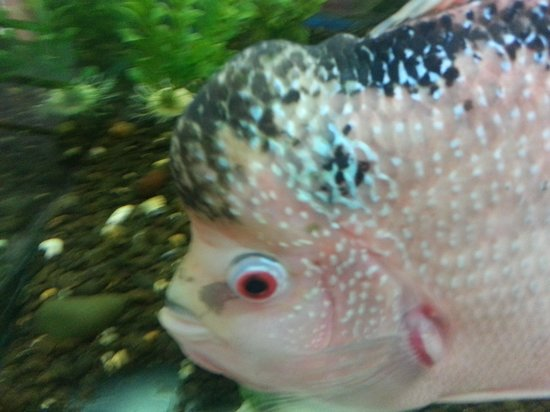 Puffer fish picture of dolphin aquarium mumbai bombay for Puffer fish aquarium