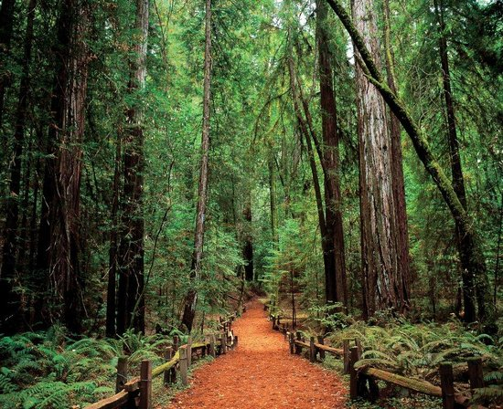 Armstrong Woods Sonoma County