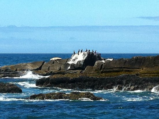Hilltop ocean view site picture of depoe bay oregon for Depoe bay fishing charters