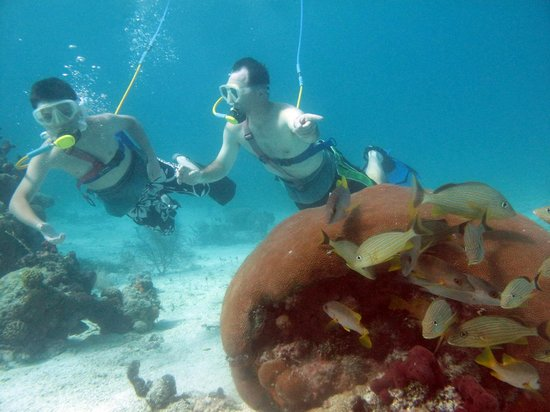 Snuba At Coral Gardens Reef Park In Provo Picture Of Snuba Turks And Caicos Providenciales