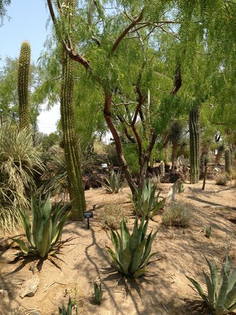 Botanical Cactus Garden Picture Of Ethel M Chocolates Factory And Cactus Garden Henderson