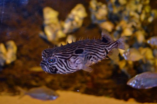 Scorpionfish Picture Of North Carolina Aquarium At Fort Fisher Kure Beach Tripadvisor