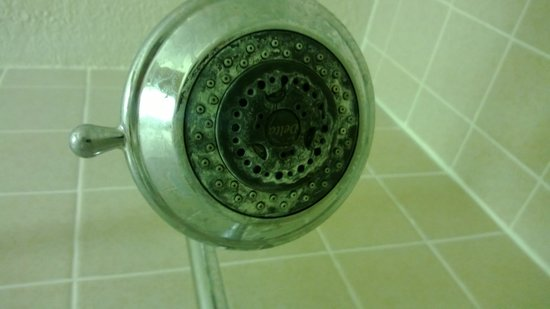 Red Lion Hotel Grants: Dirty Showerhead