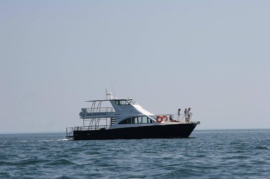 Shearwater Coastal Cruises and Dive Chartering
