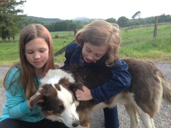 Doire Farm Cottages: Scruffy the friendly host