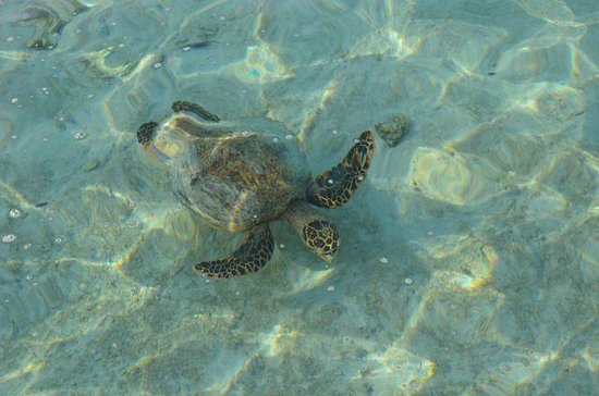 LUX* South Ari Atoll: turtle at the water villa