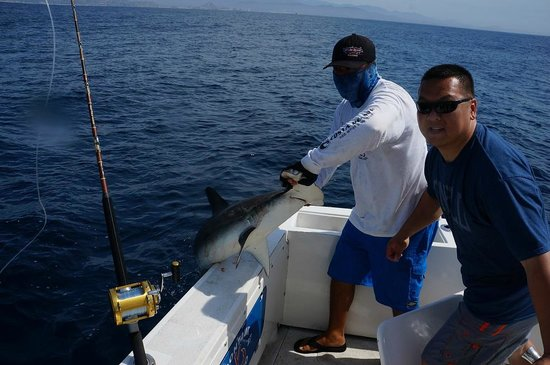 My cousin 39 s hammerhead shark picture of cabo magic for Magic sport fishing