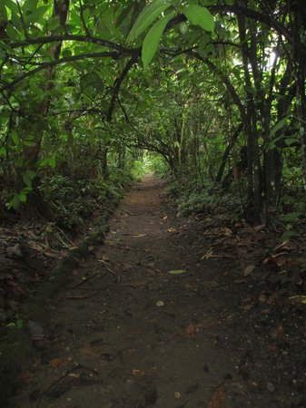 Arenal Oasis Eco Lodge & Wildlife Refuge: A walking path on the grounds of the Eco Lodge