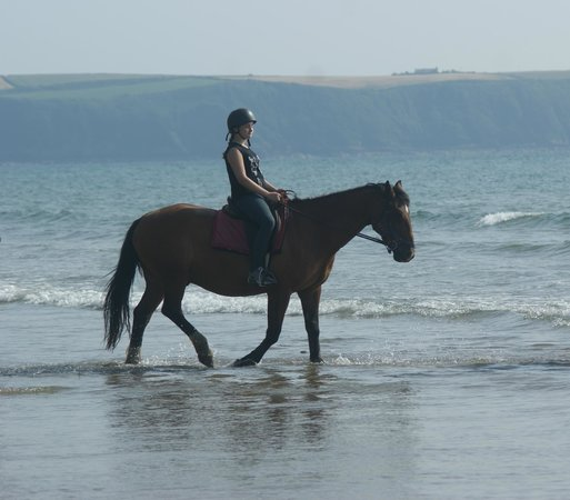 Haverfordwest, UK: Thunder- couldnt of asked for a better horse-XXXXXXXXX