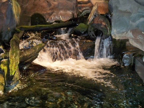 Waterfall Picture Of Great Lakes Aquarium Duluth
