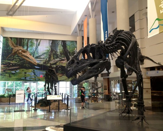 The teropod dinosaur allosaurus picture of virginia Dinosaur museum ohio