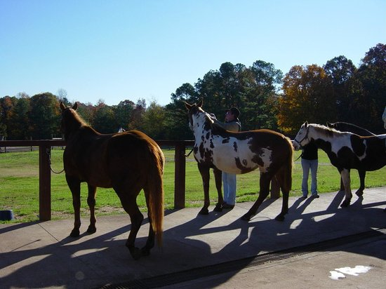 Southern Cross Ranch: Preparing for the ride