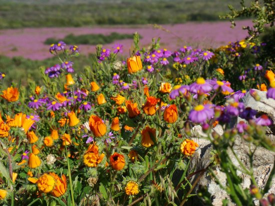 Tailor made tours to the west coast wild flower bloom in Flowers that bloom in september