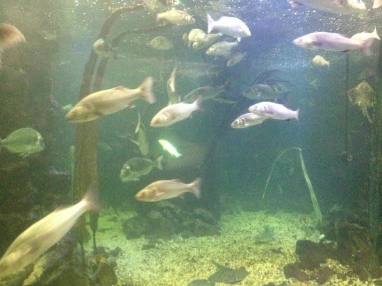 Pictures of Anglesey Sea Zoo - Attraction Photos