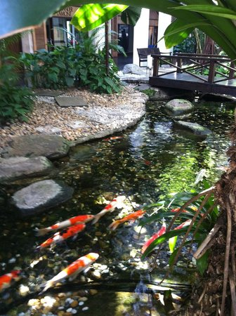 301 moved permanently for Koi ponds near me