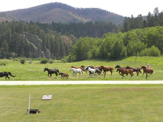 High Country Guest Ranch: Horses